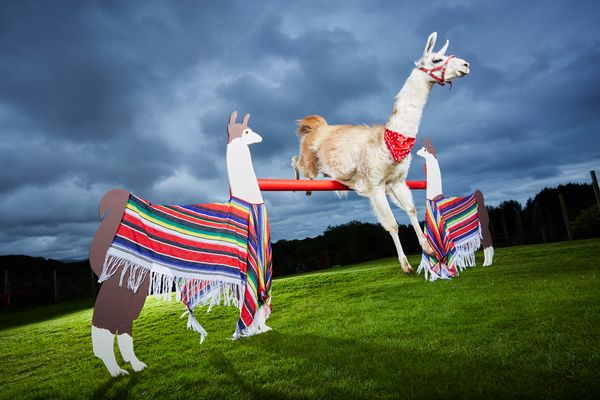 "<a href=""http://www.guinnessworldrecords.com/news/2016/9/caspa-the-llama-reaches-amazing-heights-in-gwr-2017-443139"" target="""