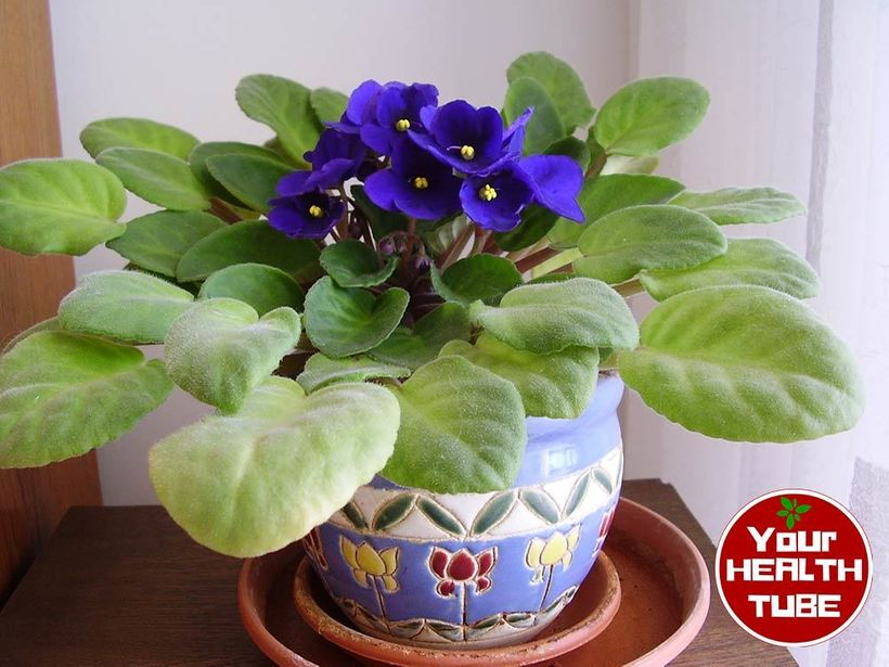 Houseplants To Improve Indoor Air Quality: NASA Approved!