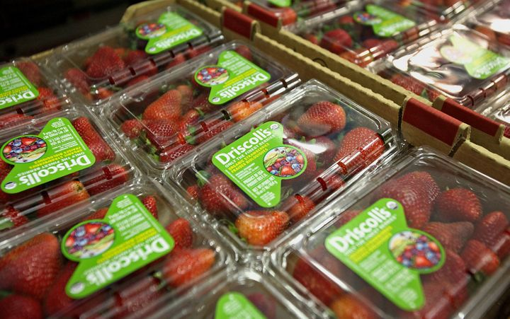 Driscoll's berries has been the subject of a worker-led boycott this year as the company's workers have protested poor pay and working conditions.