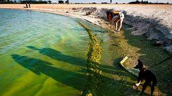 OREGON, OH - AUGUST 3: Eden Rogers, 13, uses a stick to try and scoop algae off the shoreline as the shadows of her sisters Brittany Rogers, 27, and Danielle Rogers, 24, with Danielle's toy Australian Shepherd, Barniby, walk the beach at Maumee Bay State Park in Oregon, Ohio on Sunday, August 3, 2014. The sisters, who grew up in the Toledo area, said they came to the beach to look at the Algae bloom, along the shore of Lake Erie, which has rendered the city of Toledo under a State of Emergency after a toxin from the algae polluted the city water supply rendering about 400,000 people in the Toledo area without useable water. (Photo by Ty Wright for The Washington Post via Getty Images)