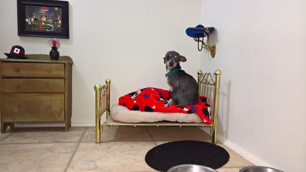 On the serious side, she says herchihuahua needed a place to chill, since he gets nervous when there are a lot of peopl