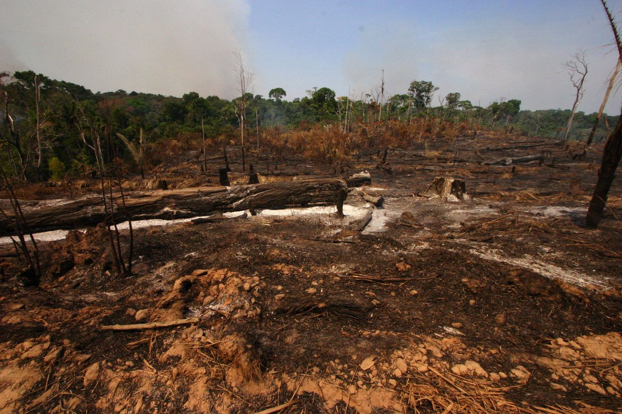Humans Have Destroyed 10% Of The World's Wilderness In 20