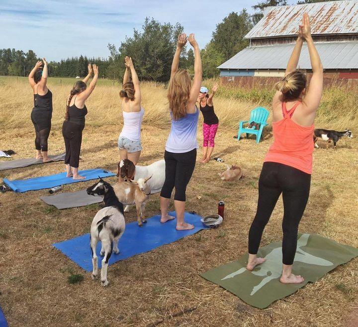 A Goat Yoga class at No Regrets Farm.