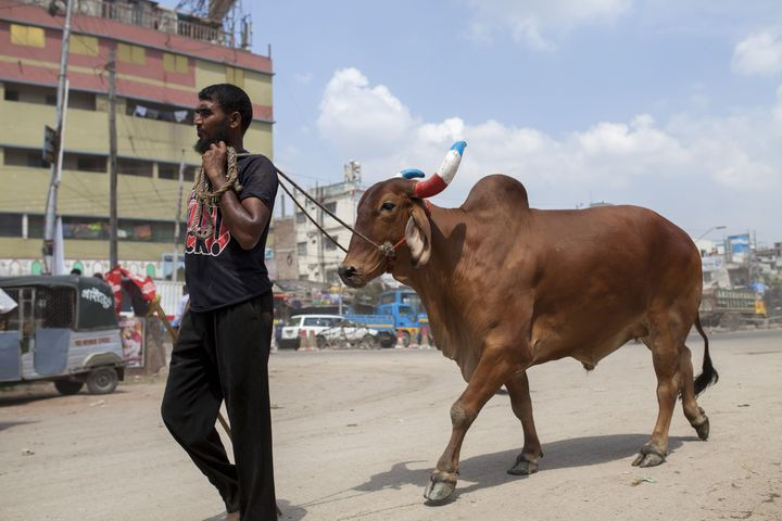 A Muslim manpurchases cattle to sacrifice for the upcoming festival of Eid al-Adha in Dhaka, Bangladesh.