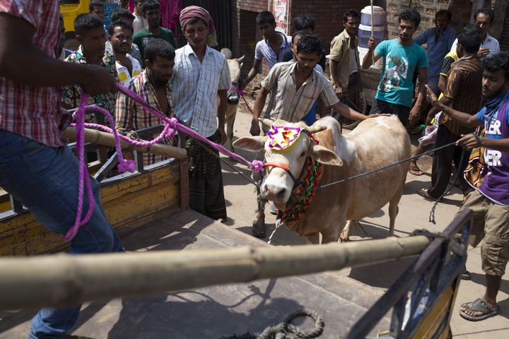 Bangladeshi Muslims purchase cattle to sacrifice for Eid al-Adha.