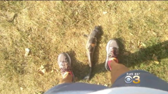The offending catfish, with feet for scale.