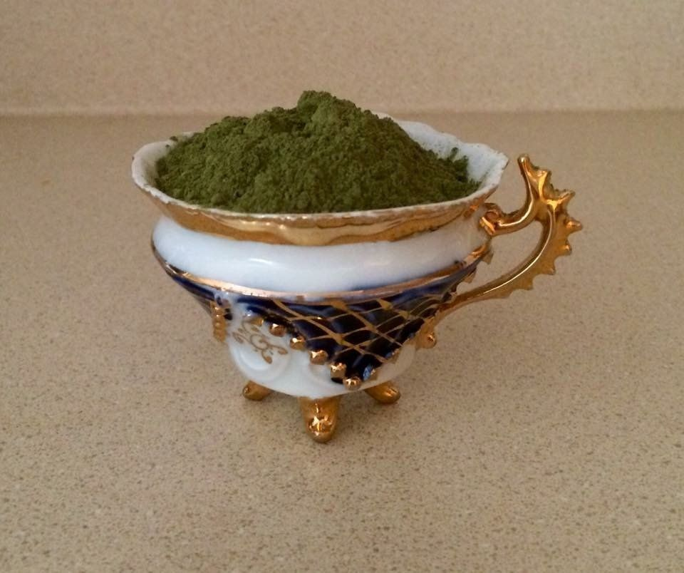 A teacup of kratom powder, made from the leaves of Mitragyna speciosa, a Southeast Asian tree related to coffee. Th