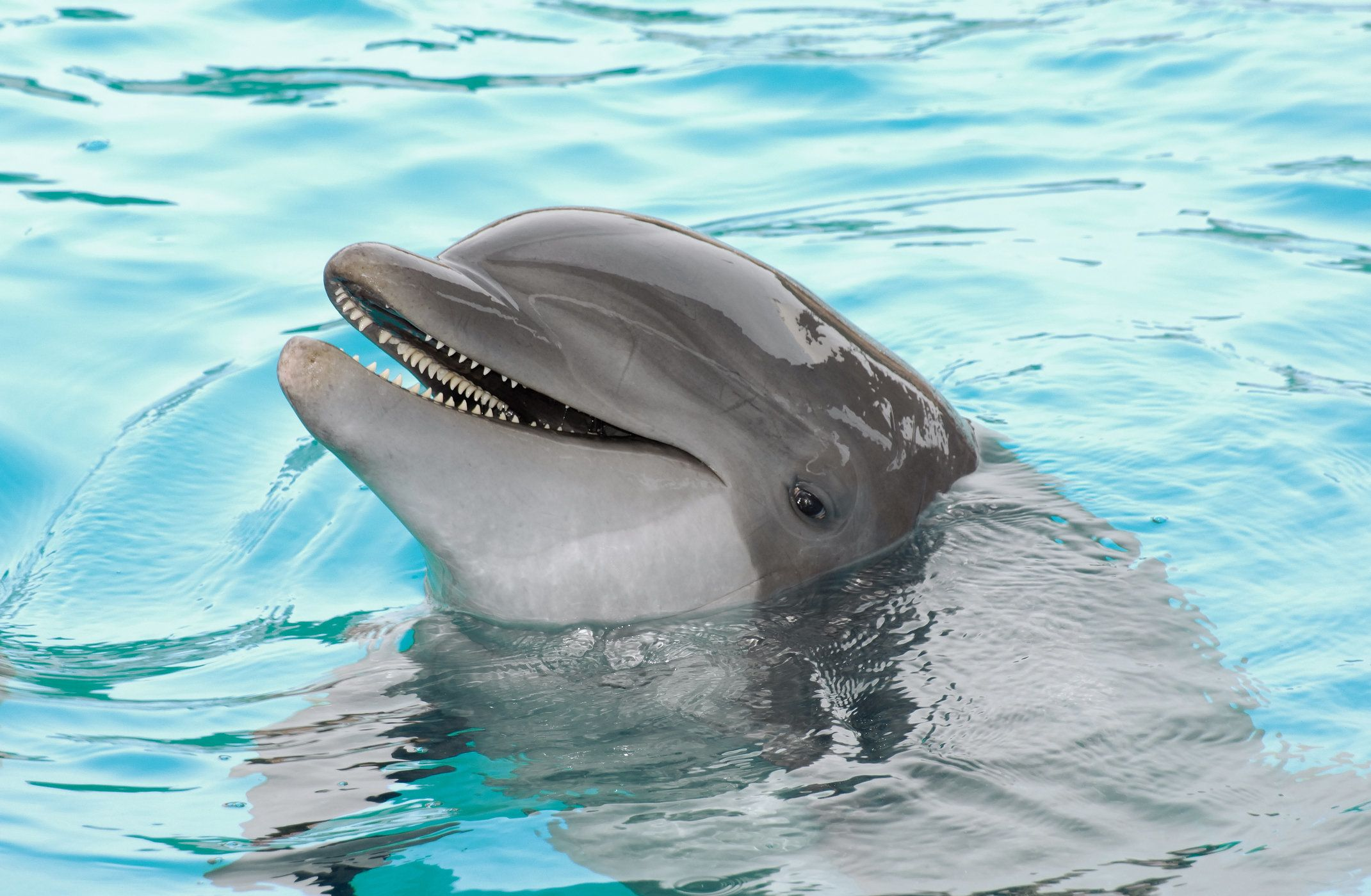 Dolphin Conversation Caught On Tape For First