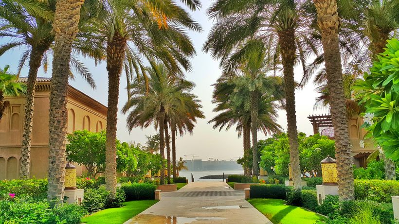 Palm trees and beautiful manicured gardens