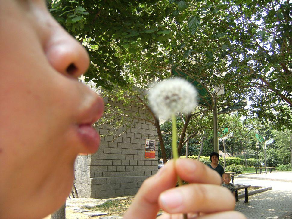 """Jin Ling, """"Watching dandelion watching blowing dandelion,"""" China, 2009."""