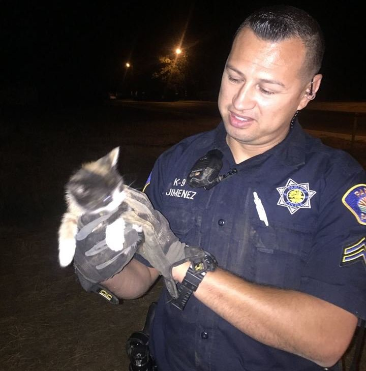 Officer Jimenez with the rescued kitten.