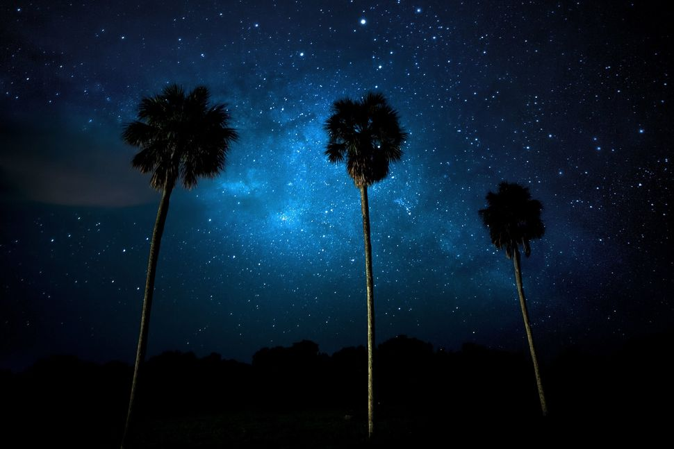 A trio of palm trees frame the Milky Way at Everglades National Park.