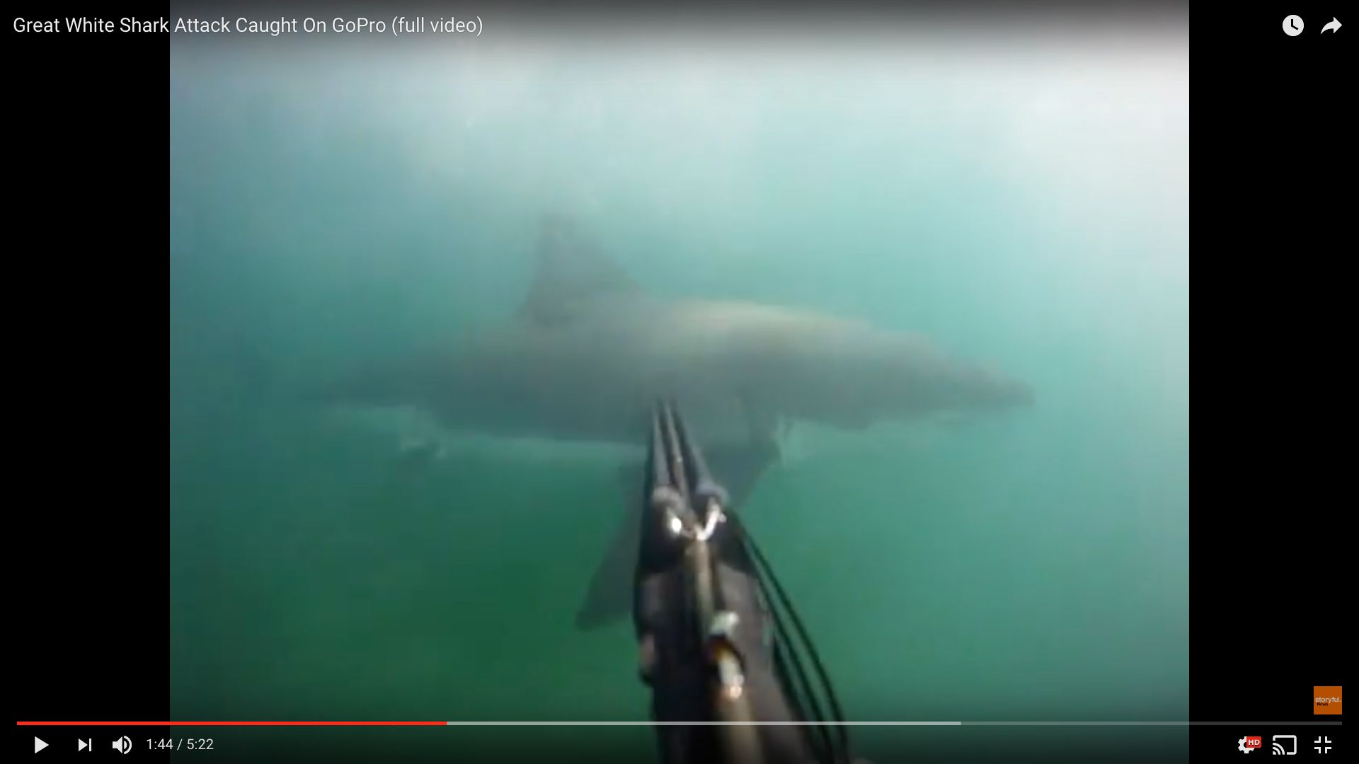 A GoPro cam attached the the divers speargun captured the great white circling by