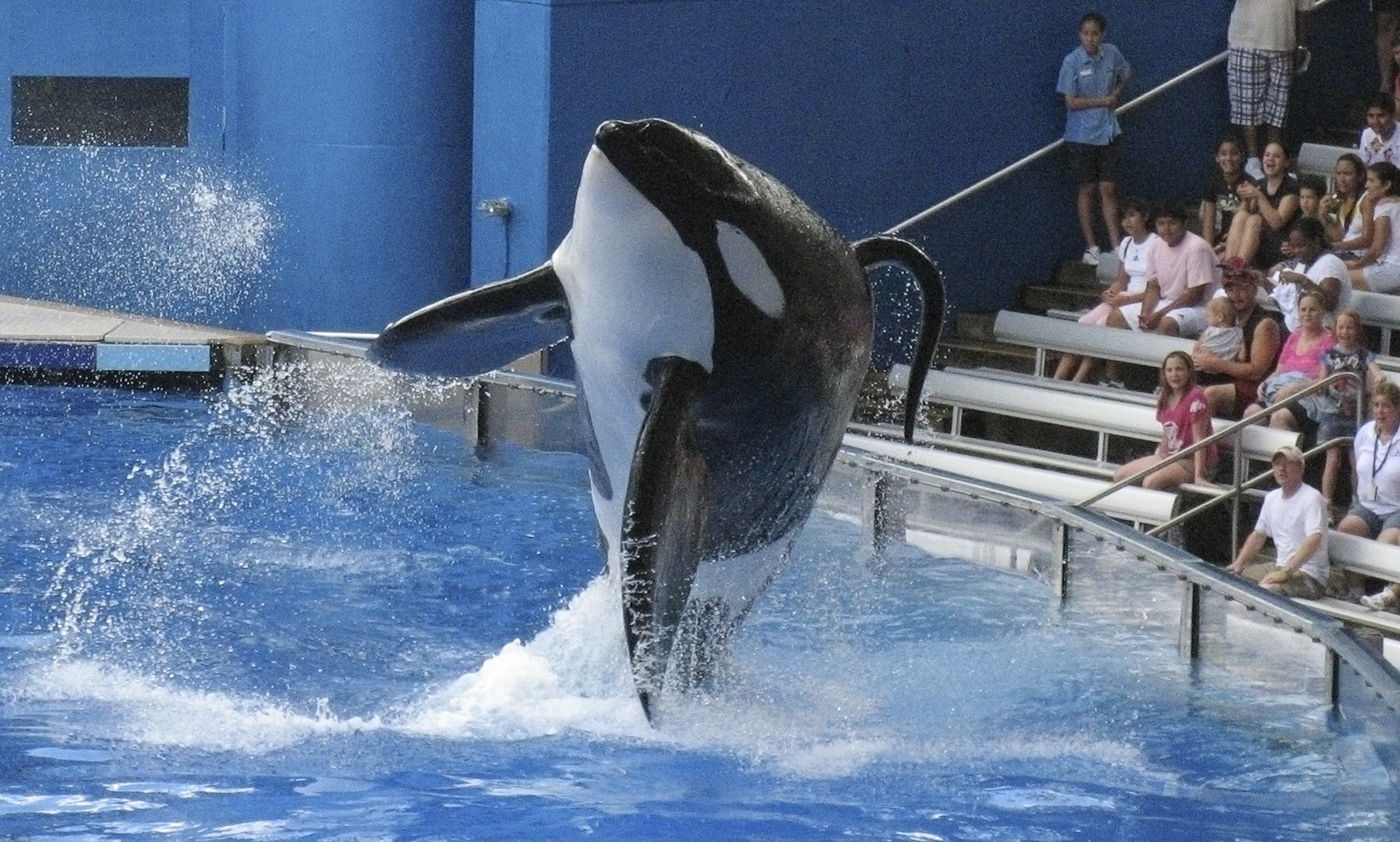 """Tillikum, a killer whale at SeaWorld amusement park, performs during the show """"Believe"""" in Orlando, in this September 3, 2009 file photo. Tillikum, who last year drowned a trainer at SeaWorld, performed publicly on March 30, 2011 for the first time since the death. REUTERS/Mathieu Belanger/Files (UNITED STATES - Tags: ANIMALS)"""