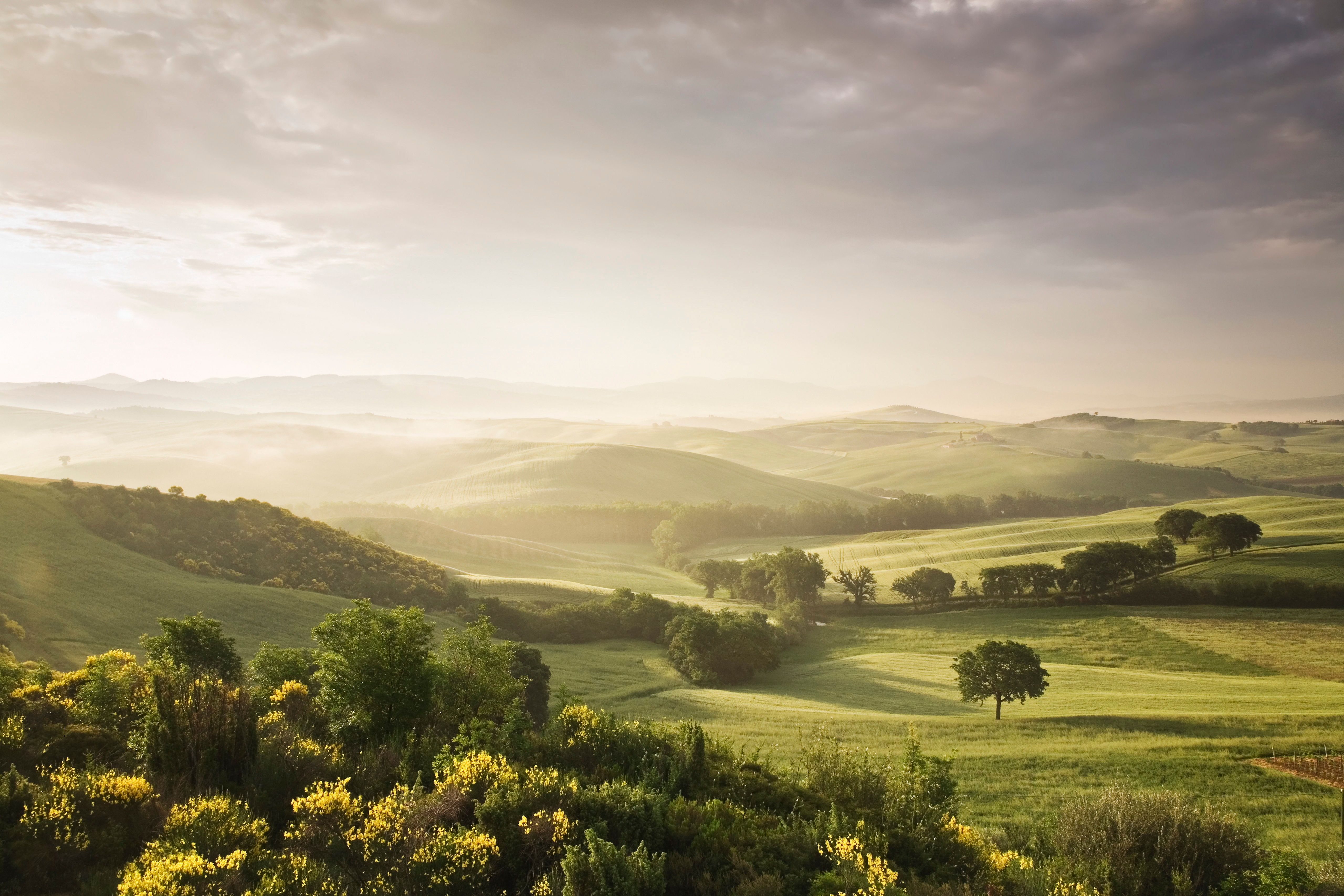 Single tree at sunset, Orcia Valley (Val d'Orcia), UNESCO World Heritage Site, Province of Siena, Tuscany, Italy, Europe