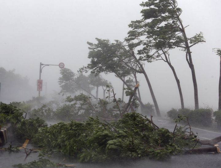 Trees are broken by strong wind on a highway from Pingtung to Kenting in typhoon-hit Taiwan, southeast China