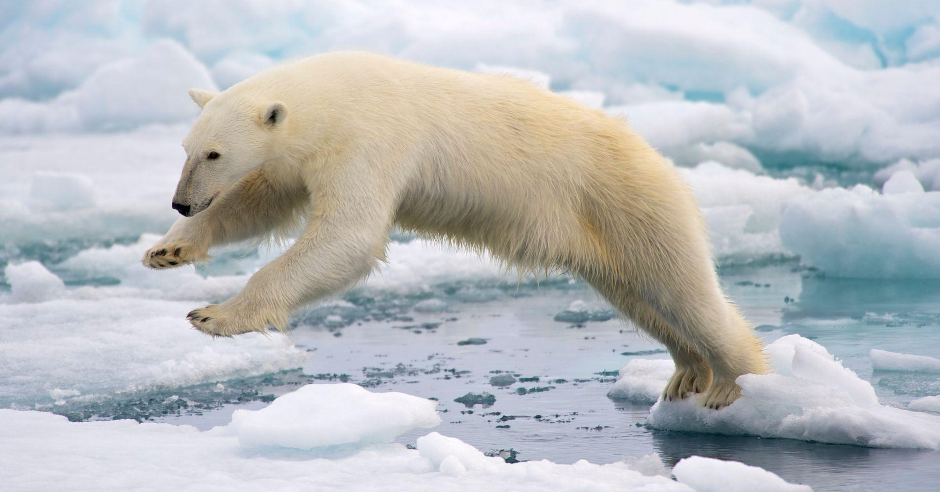 from Christopher gay polar bear free xxx video