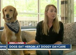 Dog Nearly Dies After Trying To Eat 17 Bags Of Heroin
