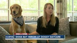 Dog Nearly Dies After Trying To Eat 17 Bags Of