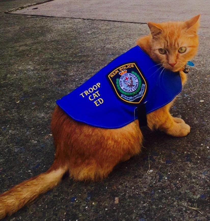This Police Force Has An Adorable New