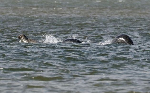 People Are Freaking Out Over This 'Convincing' Photo Of The Loch Ness