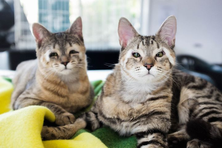 Felix and Dora suffer from arare condition thatcaused them to be born without eyelids.