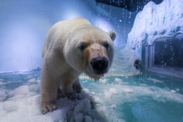 Yorkshire Wildlife Park has offered to take polar bear 'Pizza', who currently resides at an aquarium...
