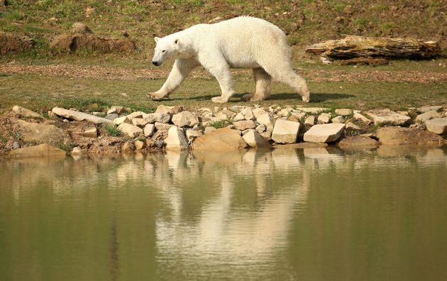 Yorkshire Wildlife Park's 'Project Polar' has been described as a 'ground-breaking