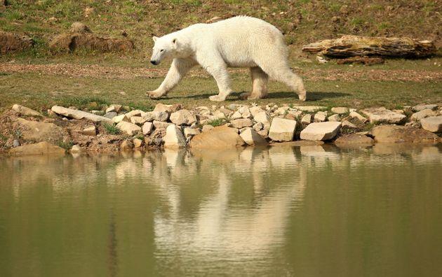 'World's saddest Polar Bear' offered new home