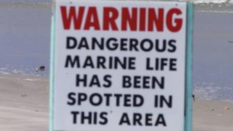 An unidentified surfer is shown near a sign warning of dangerous marine life south of the Ponce Inlet in New Smyrna Beach, Florida August 28, 2001. Ten shark attacks have occurred in the area in the last ten days, forcing officials to close part of the beach, but said they would not risk officers' safety to arrest surfers.  JLS/JP