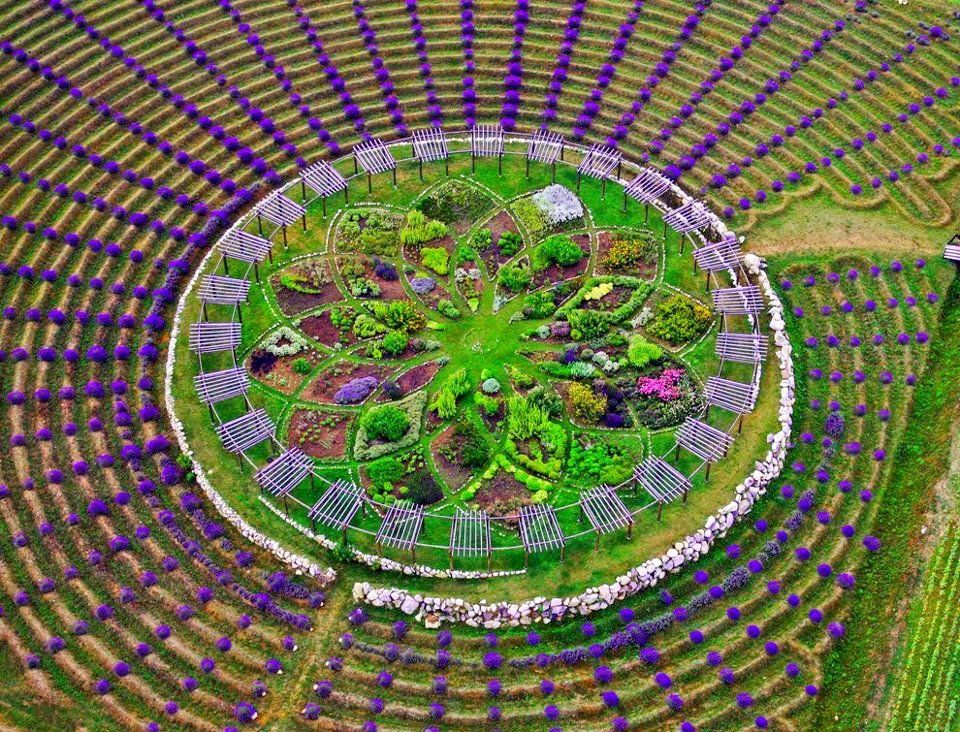 This Mesmerising Lavender Labyrinth Is A Real-Life