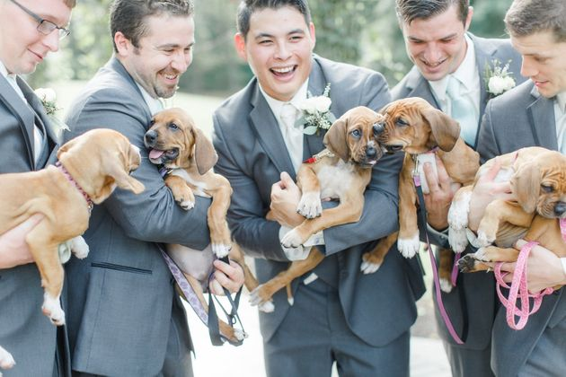 The boxer-coonhound pups were brought to the shelter when they were just a week old. Look how far they've