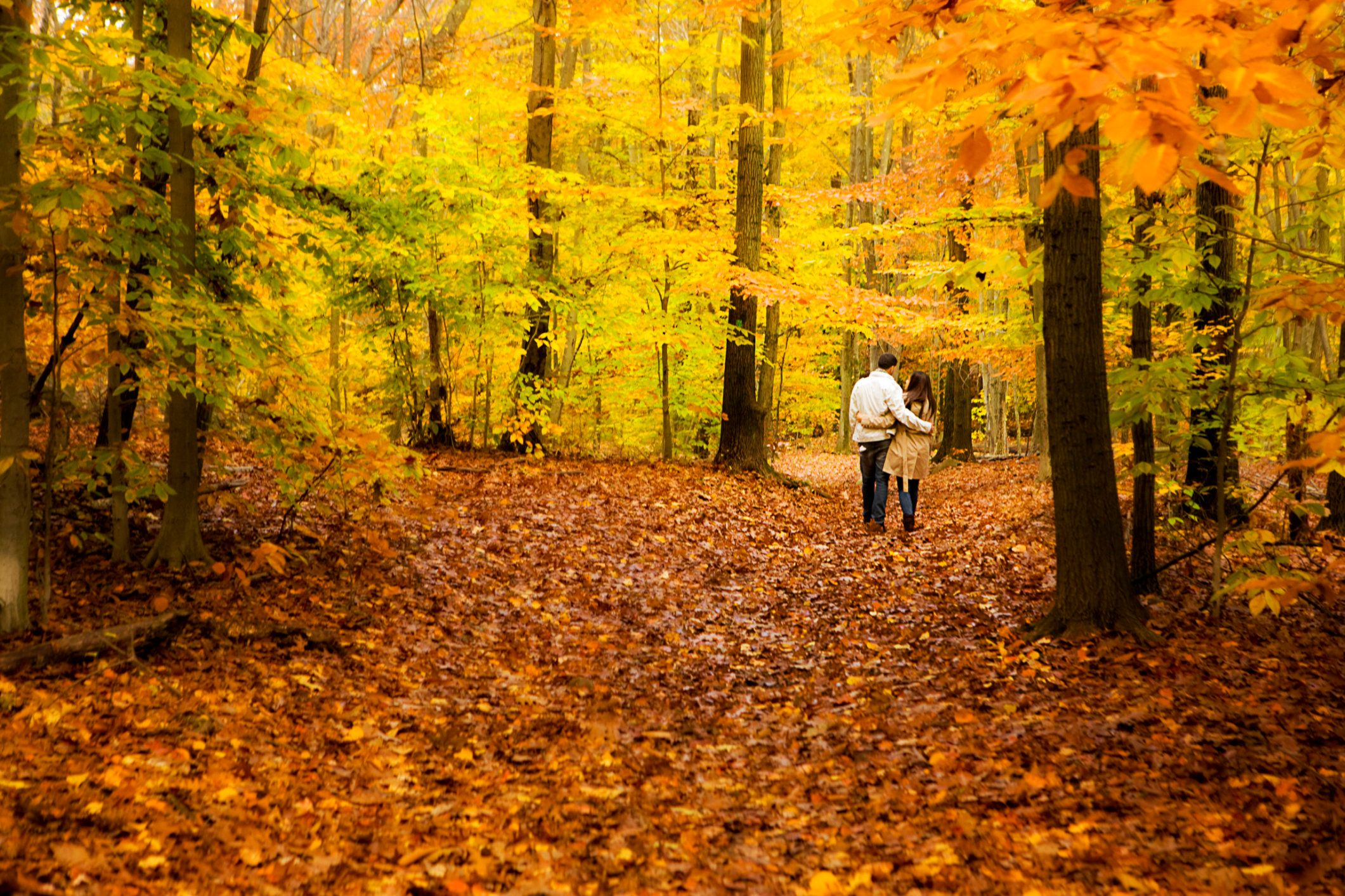 Couple walking through forest of fall foliage