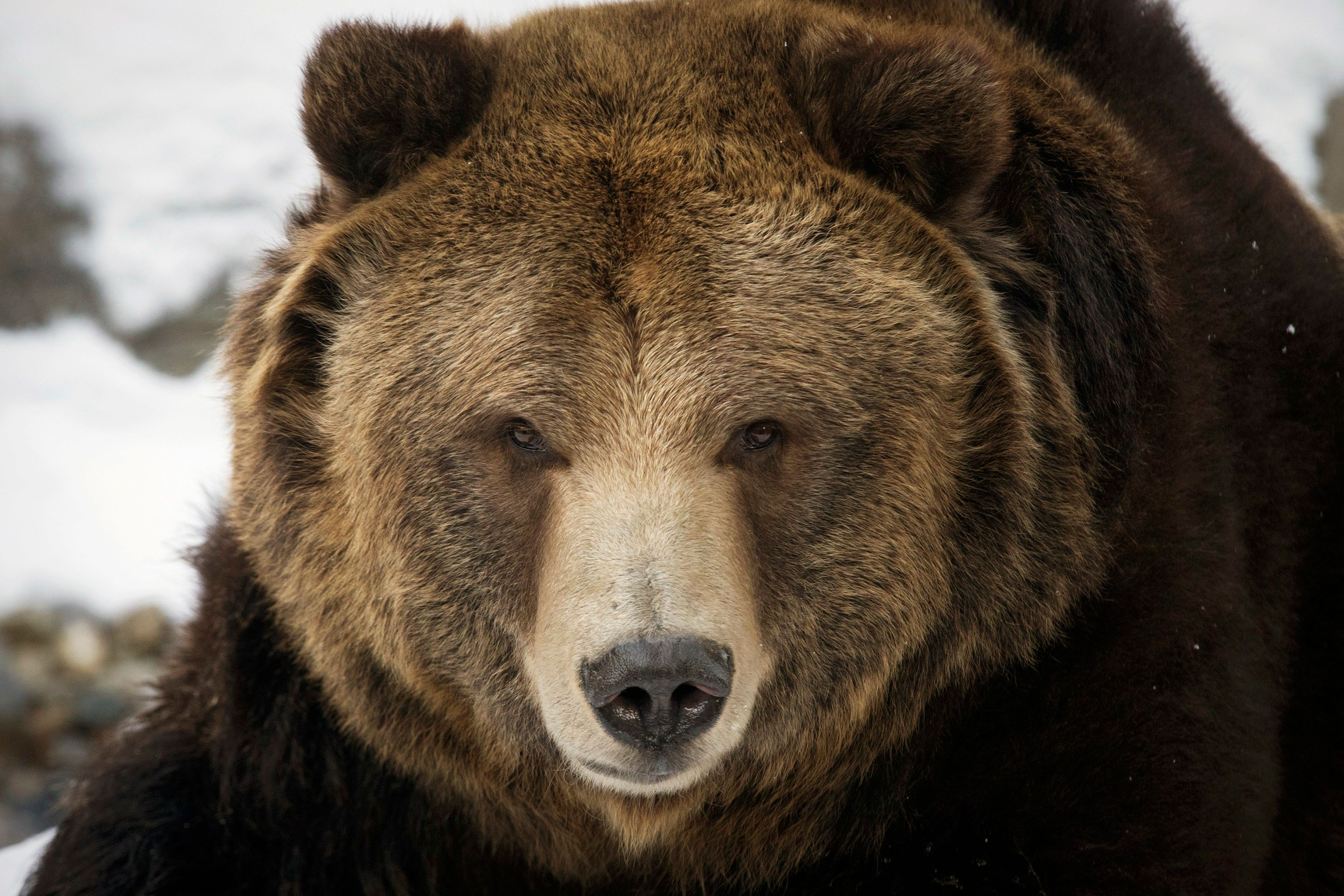 The anti-immigration Federation for American Immigration Reform said in a report Tuesday that if bears were included in publi
