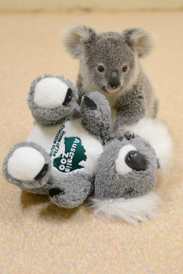 Shayne and his plush koala.