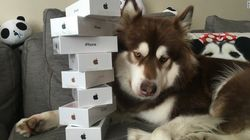 Chinese Billionaire Gets 8 iPhone 7s For His