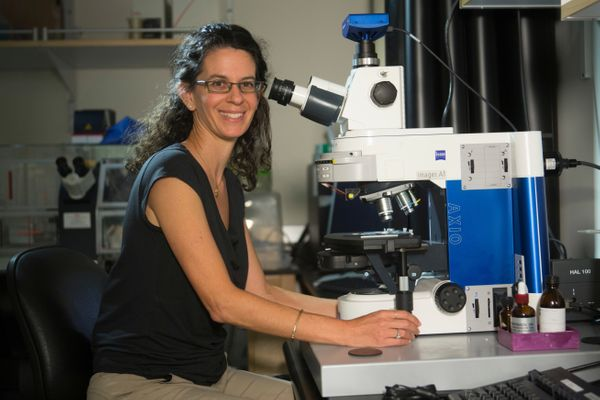 The 44-year-old biology professor at theCalifornia Institute of Technology studies theevolution of ancient microb