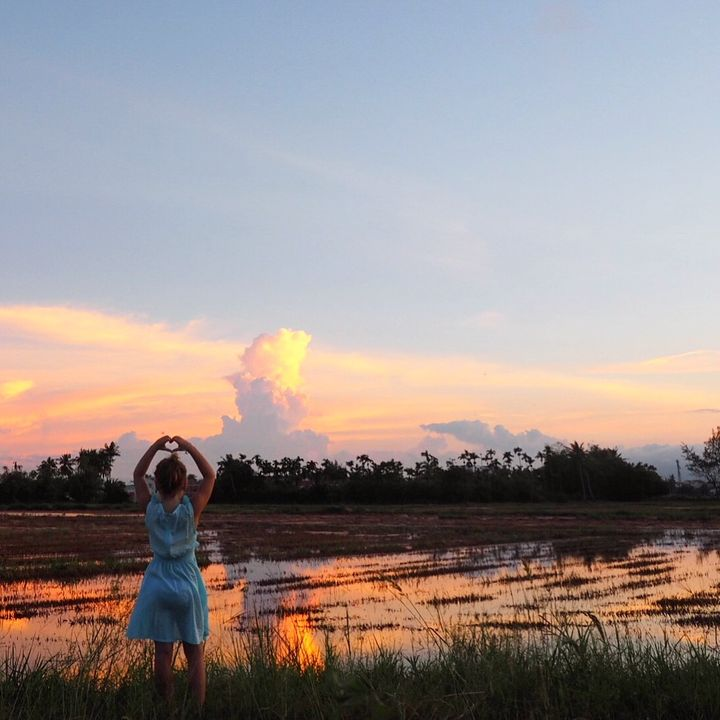 Rice paddy sunset, Hoi An, Vietnam