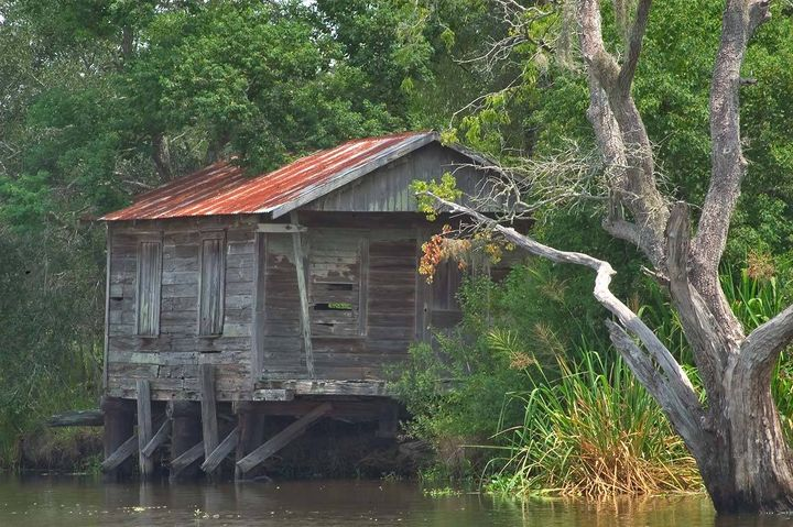 Louisiana Bayou Country