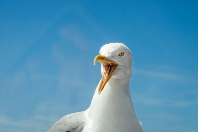 Barbara Cox was attacked by seagulls as she hung out her washing (file