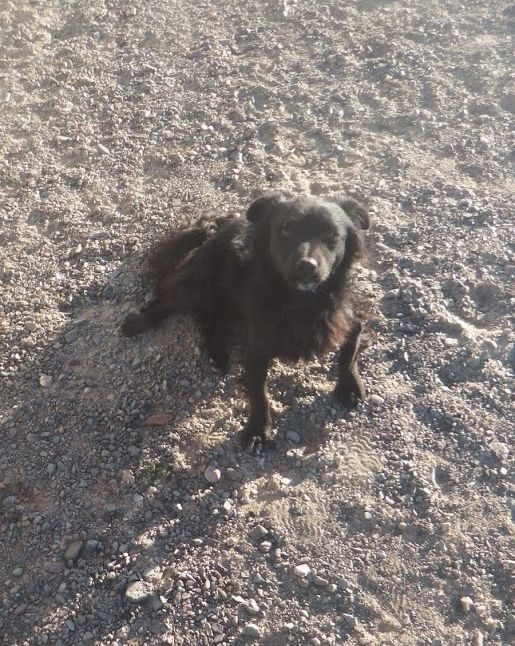 My doggie friend in Gobi desert, Mongolia, who guarded the yurt day and night.