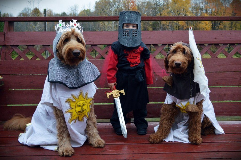 This year in honour of the 40th Anniversary of Monty Pythons Holy Grail we have created a family costume Sadly the costumes meant for my husband and I seem to look better on our dogs  We will see Who Wore It Best on Saturday PS Our son thinks he is being a robot