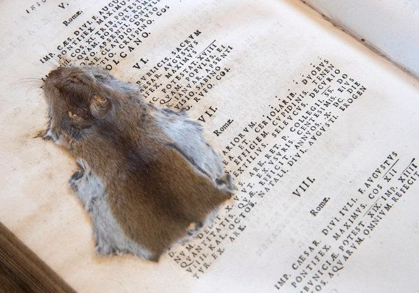 A mouse that was squashed by 19th-century pupils at the Cathedral School in a Latin textbook that was published in 1684.