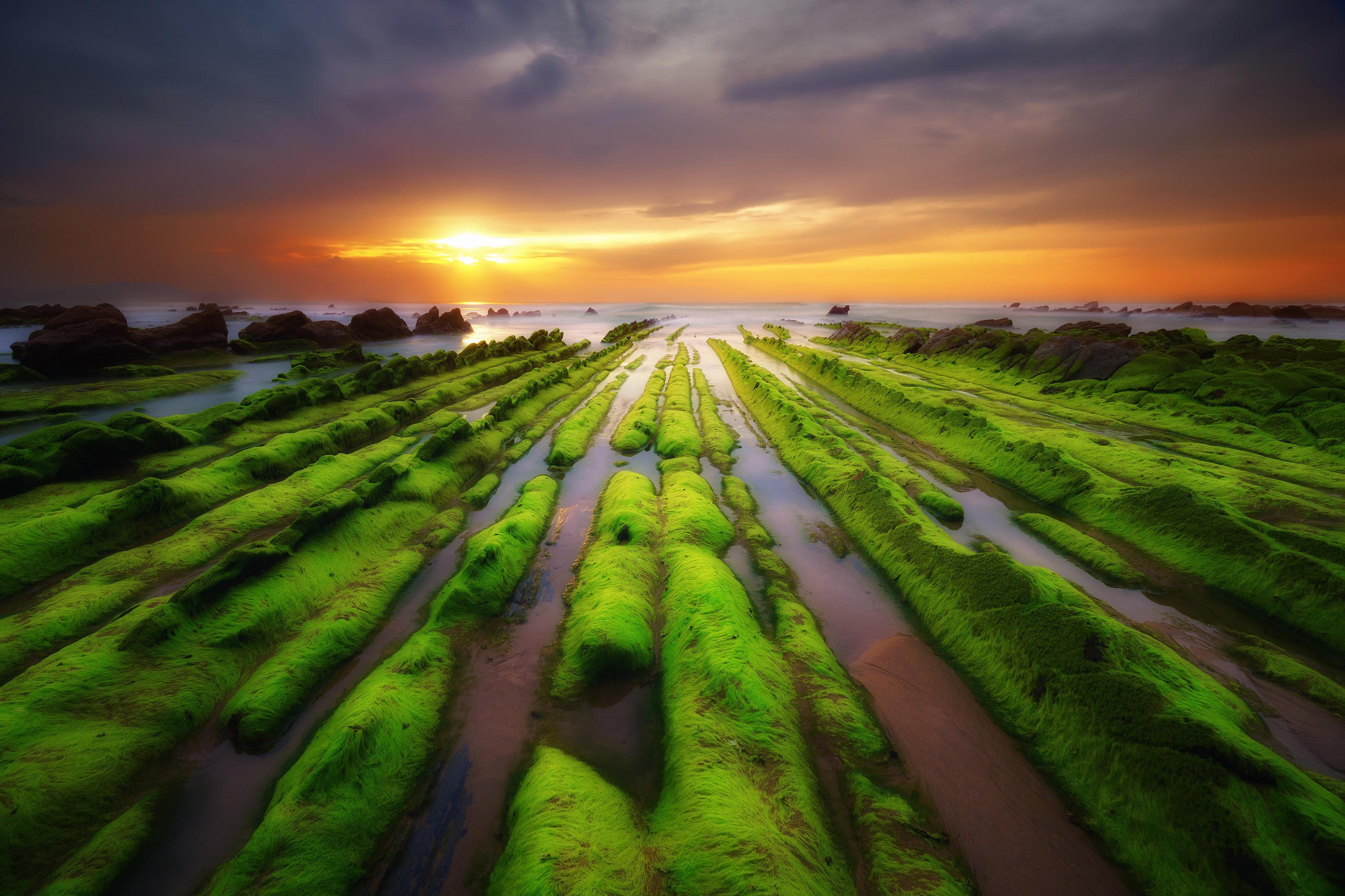 green seaweed on rocks in Barrika beach
