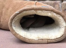 Deadly, 'Horny' Snake Found Snuggling In Woman's Ugg Boot
