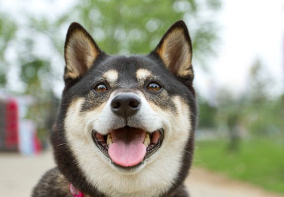 What The Internet's Fave Dog Can Teach Us About The Perils