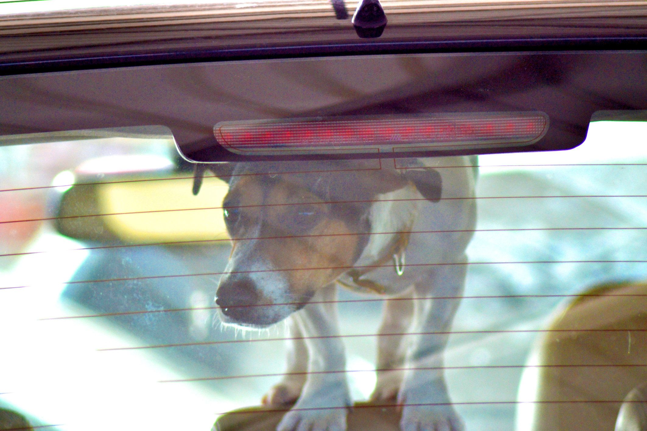 It's now legal for Californians to break into locked cars to rescue animalsif there's reason to believe they arei