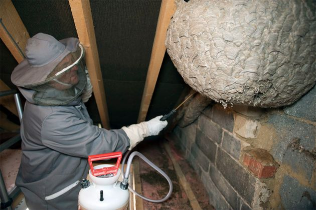 Giant Nest Crafted By 10 000 Stinging Wasps Found In