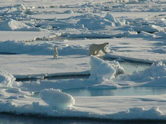 <i>Arctic Ocean</i>