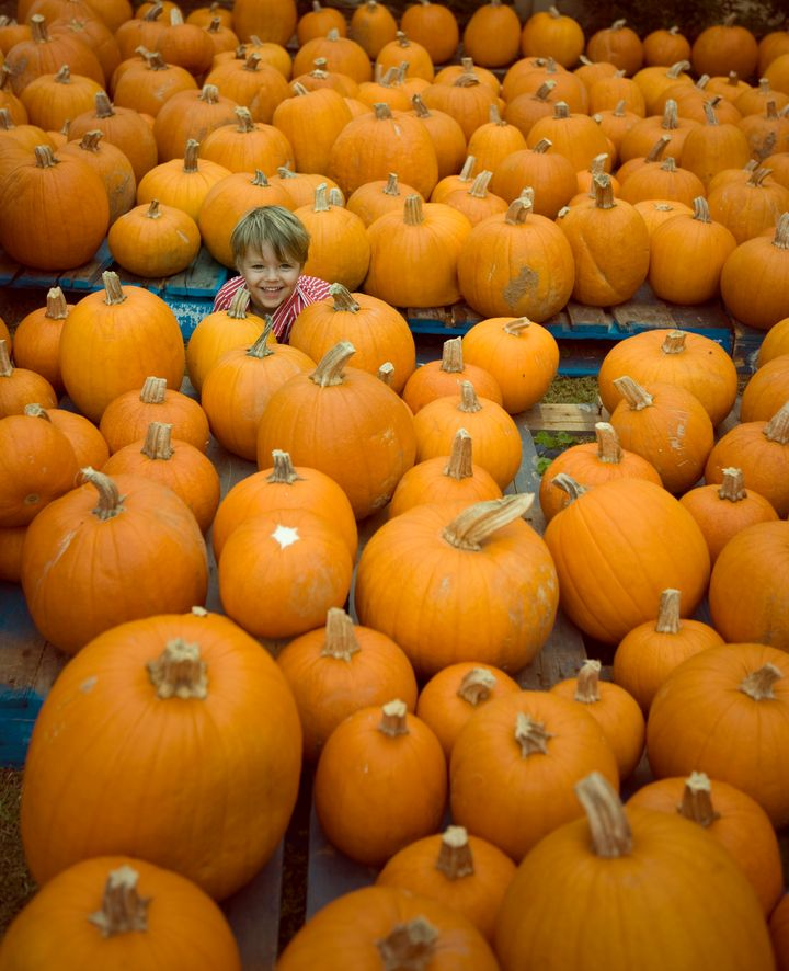 You don't have to hide your kid in a pumpkin patch this fall.